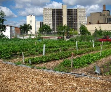 New studies find that urban farms are facing increased competition from nonprofits but are continuing to succeed through community support.